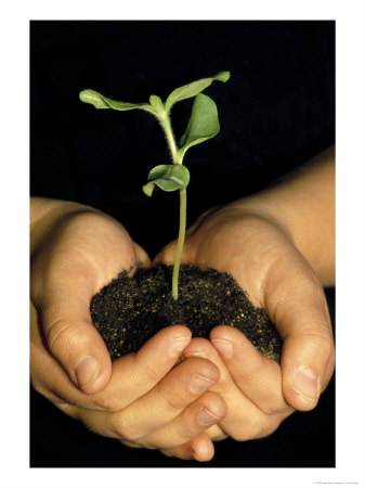 432307hands-holding-seedling-posters
