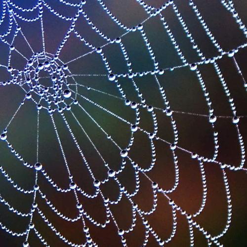 mreza-energije-svijesti